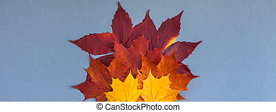 Dry bright autumn leaves concept