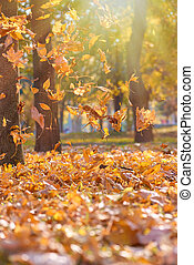 dry bright orange and yellow leaves flying in the air in an autumn park in the rays of the evening sun