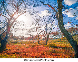 Dry brown grass leaves in the forest with leaves changing color Blue sky, white clouds, daylight at Yamagata, Japan
