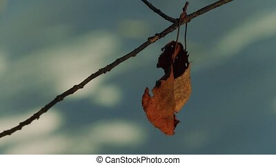 dry brown leaf on a branch close up.