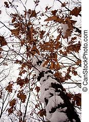 Dry brown leaves on a tree