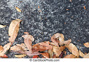 Dry brown the leaves on concrete