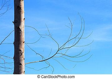 Dry brunch of tree against blue sky