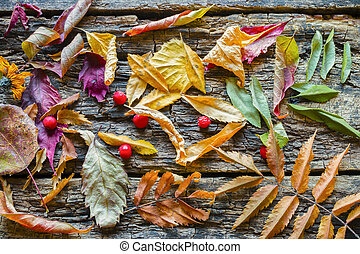 dry colorful leaves on a wooden background