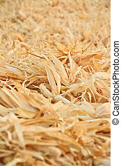 dry corn leaves