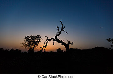 Dry crooked tree