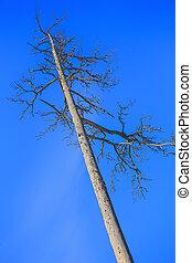 dry dead tree against the sky