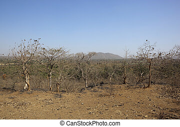 dry deciduous forest - deciduous trees in the forest of...