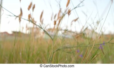 Dry desert grass in Crimean peninsula area.