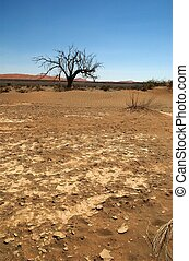 Dry earth in namib