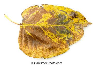 dry fall leaf
