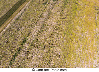dry field and meadow. aerial view, drought