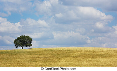Dry field of wheat .