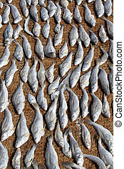 Dry fish on the ground in Sri Lanka