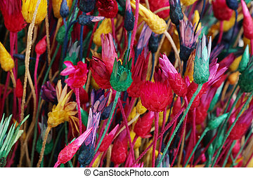 Dry flowers and grass. Abstract color background.