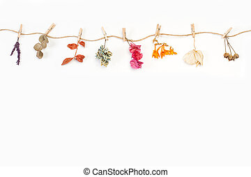 Dry flowers and leaves hanging by a thread on a white background