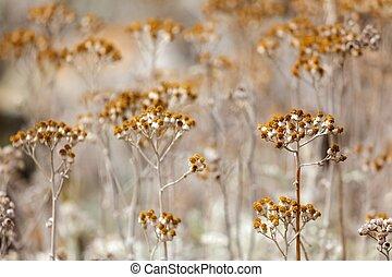 dry flowers meadow