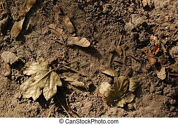 dry foliage on the ground - dry foliage lie on the ground...