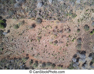 Dry forest landscape