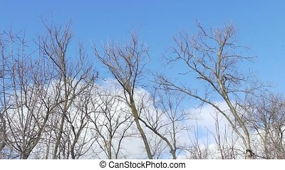 dry forest trees against a blue sky