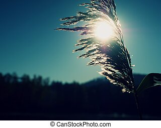 Dry golden grass stalks. Autumn nature theme