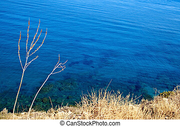 dry grass and azure sea