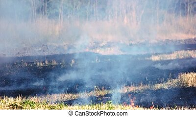 Dry grass burning in forest fire.