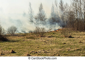 Dry grass burning in the spring forest, fire. Increased fire...