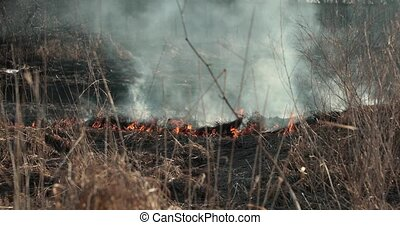 dry grass burns in the daytime.