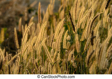 Dry grass field in scene