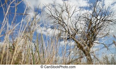 Dry grass field lonely in the field on tree a background of blue sky autumn nature