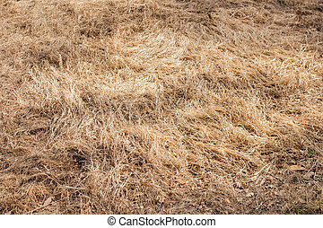 Dry grass field pasture. Early spring meadow landscape