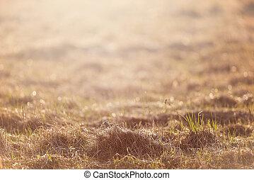 Dry grass field pasture in sunset sunlight