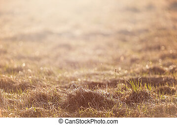 Dry grass field pasture in sunset sunlight