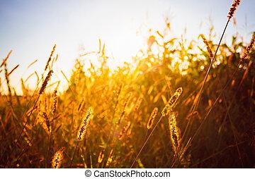 Dry grass field scene