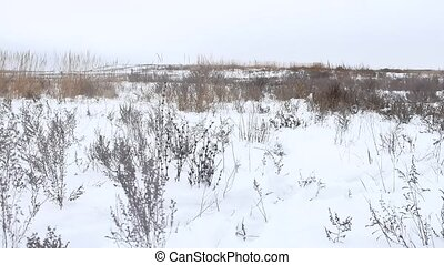 dry grass field winter nature snow winter the landscape