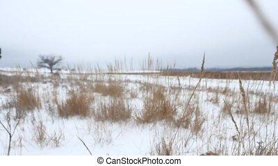 dry grass field winter snow nature winter the landscape -...