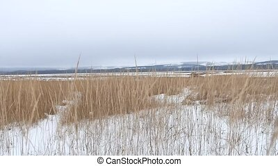 dry grass field winter snow winter the landscape nature