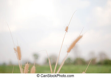 Dry grass flowers in the green nature