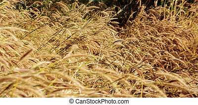 dry grass in autumn season landscape short for natural...