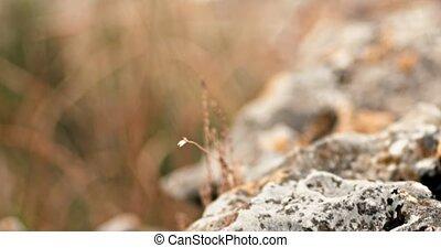 Dry grass in deserted area of Crimea macro shot in 4k