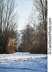 dry grass in the background of a snowy field