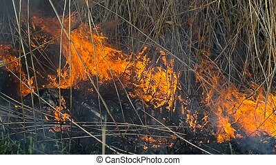 Dry grass in the field on fire