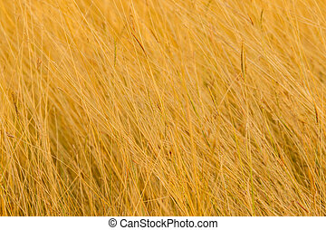 dry grass in the meadow