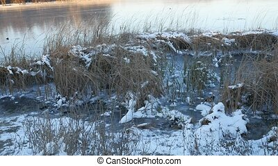 dry grass in the snow ice frozen water river nature...