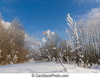 dry grass in the winter woods