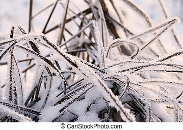 Dry grass in winter forest covered with hoarfrost close up