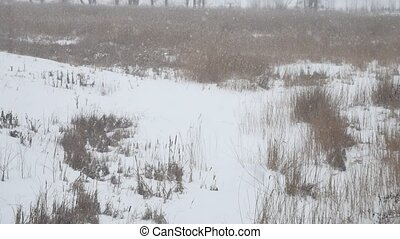 dry grass in winter on snow there is heavy snow Russia swamp...