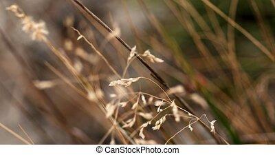 Dry grass macro handheld shot in 4k