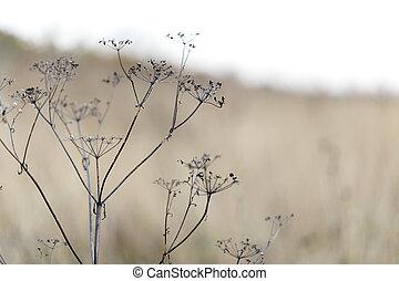 dry grass nature landscape